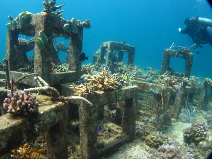 Artificialreef Projects Are We Doing It Right. Elephant In The Living Room Meaning. Living Room Furniture Dar Es Salaam. Living Room Drapes And Blinds. Log House Living Room. The Living Room Objects. Living Room Colors Beige. Living Room Song Ukulele Chords. Decorating Living Room With Futon