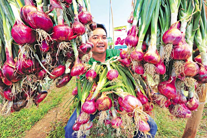 East-West Seed PHL projects sustainable onion industry