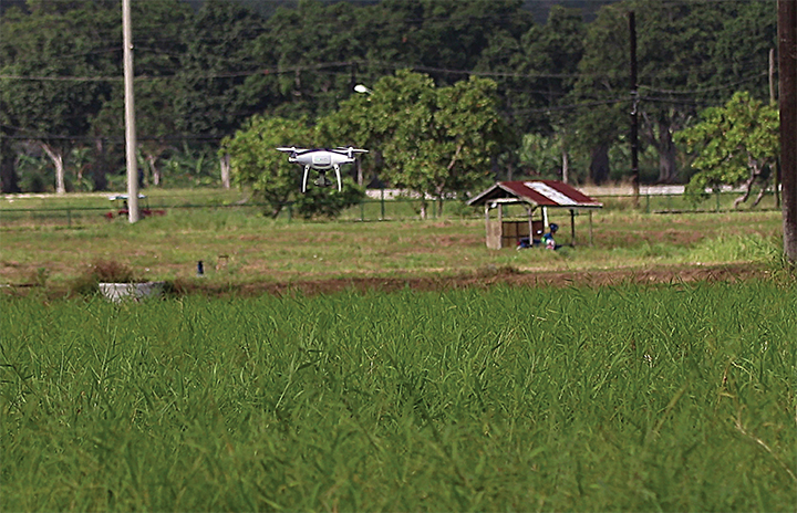 PHL farms to take flight in the future as government