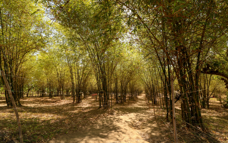 Govt to open bamboo processing plants on Panay Island